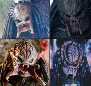 Predator-unmasked