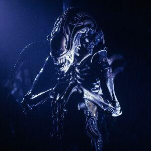 AliensWarriorprofile