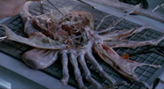 Facehuggerdissected