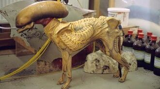 ALIEN 3 Dressing the Whippet ADI BTS