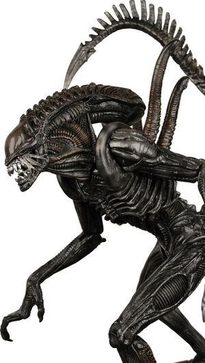Alien warrior1