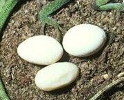 Terrorteeth eggs
