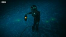 Drwho glow fish