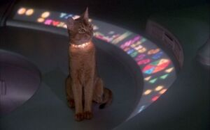 The cat from outer space 1978 alien in space ship