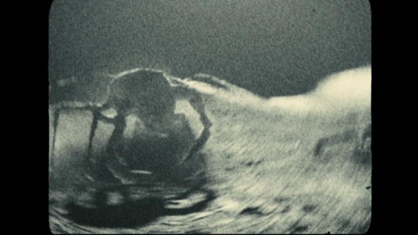 Rock Aliens (Apollo 18) | Alien Species | FANDOM powered ... Apollo 18 Alien Footage