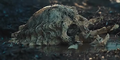 Pred-skull-1