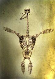 Swimmer Skeleton
