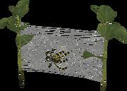 Arachnode
