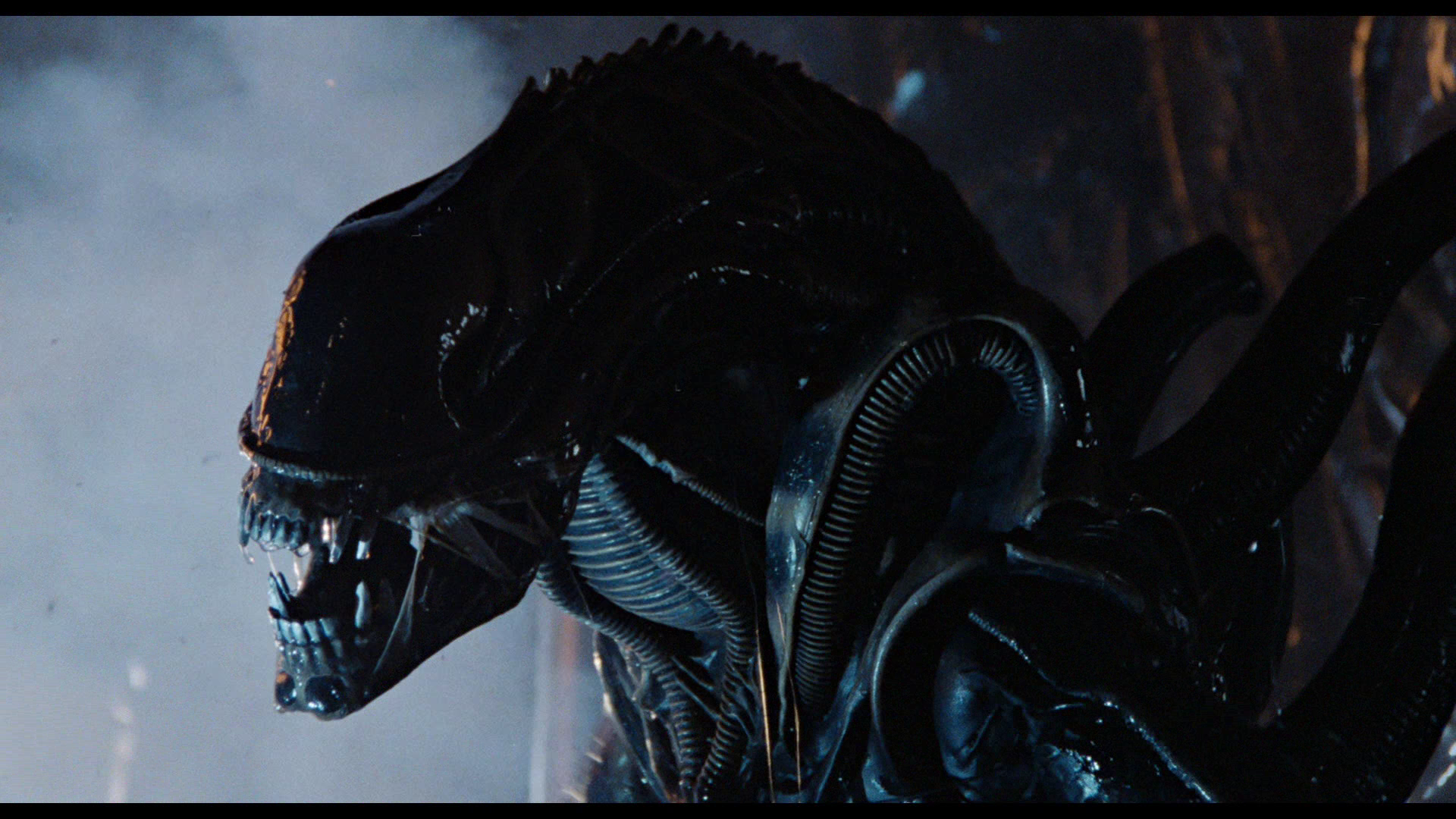 Xenomorph | Alien Species | FANDOM powered by Wikia on yoda's home planet, krypton superman home planet, superman's home planet, chewbacca's home planet, transformers home planet, luke skywalker's home planet, predator home planet, alien home planet,