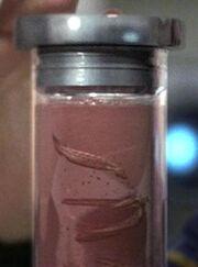 Immunocytic gel worms