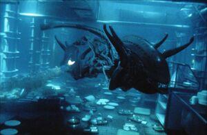 ClonedXenomorphs-swimming