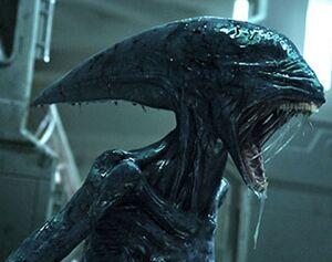 Deacon alien prometheus born