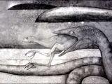 Amphicephalus