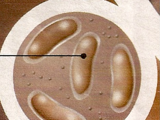 Saturnian Bacteria