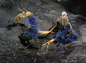 Ornithoid Lifeforms