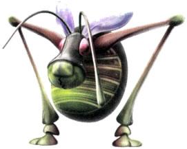 Antennabeetle