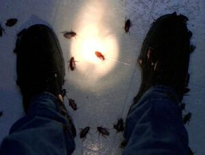 Roaches-XFiles