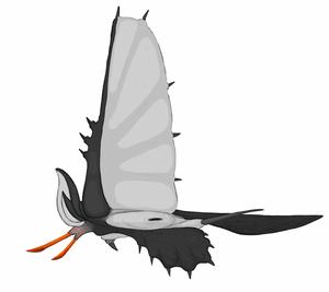 Female Spockbat