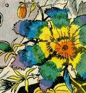 Rainbow-flowers