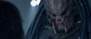 180px-Ancient Predator