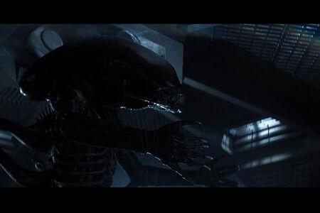 Alien - gato smucky 16