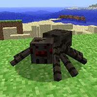 Spider Minecraft a