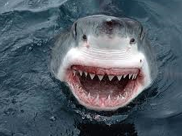 File:Jaws.png