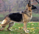All types of dogs Wiki