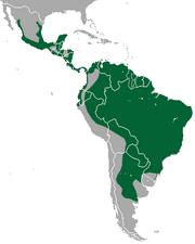 Jaguarundi range