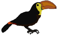 Taylor's Toucan