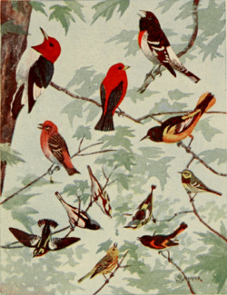 Brightly Coloured Birds by Edmund Sawyer