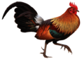 Red Junglefowl.png