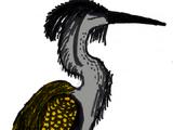 Plumed Grey Heron