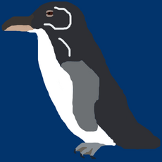 Costa Rican Adelie Penguin