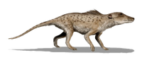 Pakicetus inachus