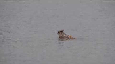 OWL Swimming in Lake Michigan 2014