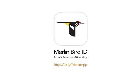 Merlin Bird ID--Free app from the Cornell Lab