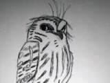 Archbold's Owlet-nightjar