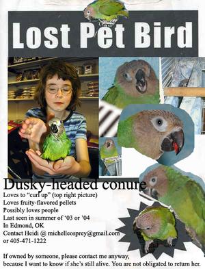 Lostbird2