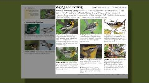 The Warbler Guide - Features of the Species Accounts