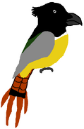 Black-headed Trogon