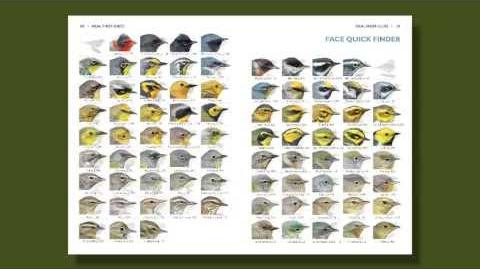 The Warbler Guide - How to Use the Quick Finders