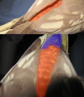 A bird's rump