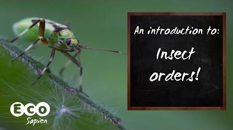 An introduction to Insect Orders