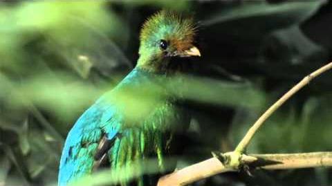 Quetzal Mesoamericano