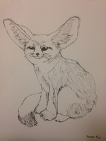 FennecFoxSketch