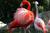 Lightmatter flamingo