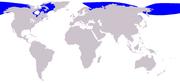 Beluga range