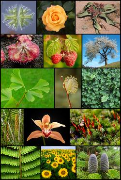 Diversity of plants image version 5