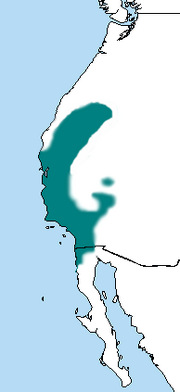 Nuttall's Woodpecker distribution